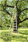 Echelle à récolte pointue en bois 3,50 m