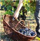 Panier à récolte vigneron en osier très grand modèle 63 cm