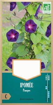 Graines d´ipomée purpurea AB